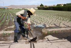 Minagri intensifica acciones para erradicar mosca de la fruta en nueve regiones al año 2023