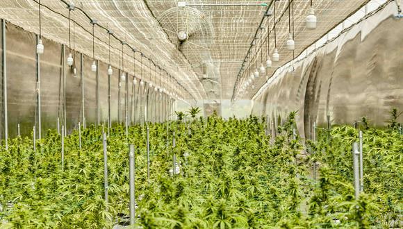 """""""Si se concretan los cambios al reglamento, significaría un retroceso a lo que se ha avanzado ya durante un año y medio en cuanto al reglamento de cannabis medicinal"""", afirma Curt Schwarz, de Asopecanna (Foto: Khiron)"""