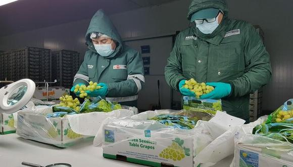 La última exportación de uva a Ecuador fue en la temporada 2015-2016. (Foto: Senasa)