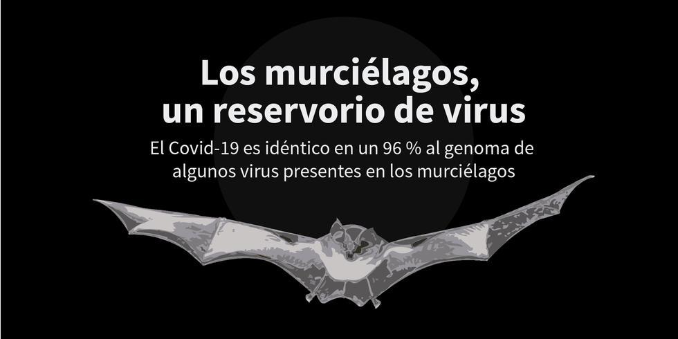 FOTO 1 | Los murciélagos, un reservorio de virus. El Covid-19 es idéntico en un 96 % al genoma de algunos virus presentes en los murciélagos.
