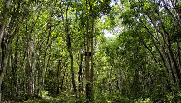 Bosques. (Foto: Difusión)