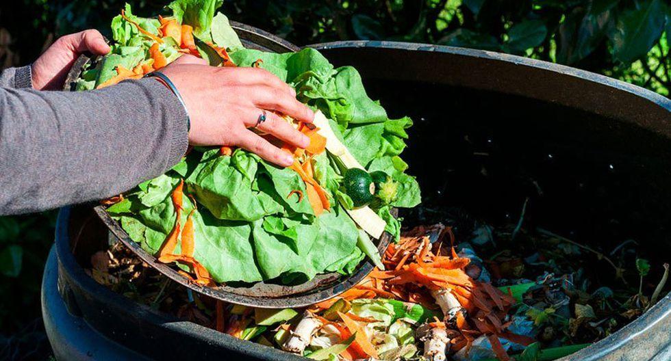 FOTO 9 | 9. Sinba. Los residuos orgánicos que terminan en la basura se pueden convertir en un problema de contaminación para la ciudad. Por ello, este emprendimiento recolecta residuos orgánicos en buen estado, principalmente de restaurantes, y los procesa para producir alimento para cerdos de granja. De esta forma impulsa el consumo cíclico.