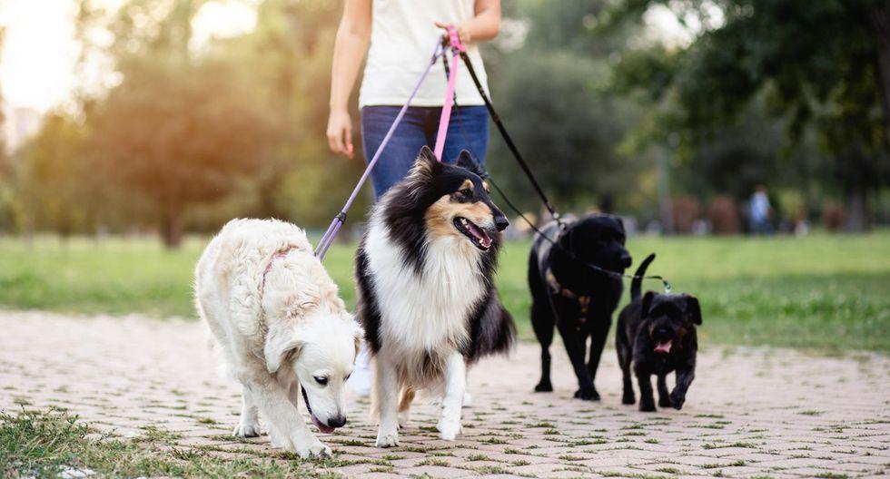 FOTO 5 | 5. Paseador de perros (Foto: iStock)