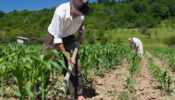 Agricultura (Foto: Andina)