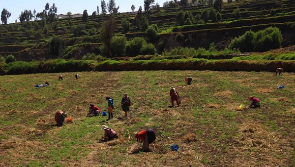 """""""Para tener una soberanía alimentaria y una agricultura floreciente se necesitan una serie de acciones concretas"""", dijo Guido Bellido. (Foto: GEC)"""