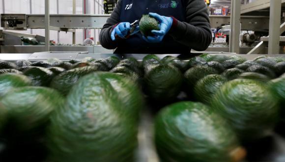 Este año, la exportación de palta a Estados Unidos caería 8%, según la CCL. (Foto: Reuters)