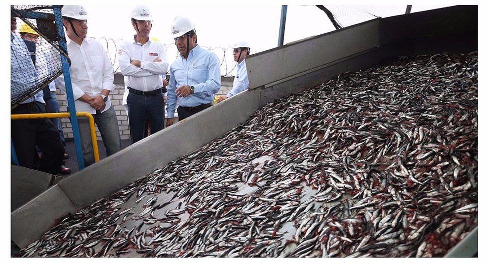Captura de anchoveta