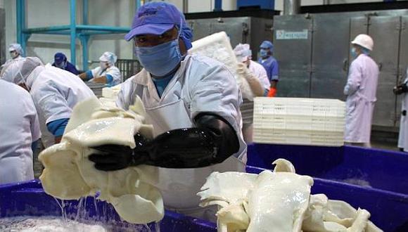 La pota es el principal producto peruano exportado de la pesca no tradicional del Perú. (Foto: USI)