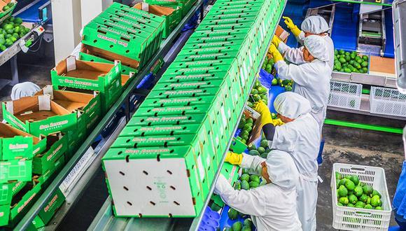 La agroexportadora inició con sus envíos de palta en mayo. (Foto: DIfusión)
