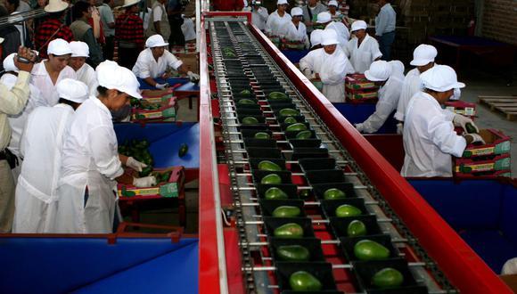 En octubre, el sector Agropecuario se incrementó en 2.38% y dejó atrás la tendencia desfavorable registrada en los cuatro meses previos, impulsado por el subsector Agrario que avanzó en 6.33% . (Foto: Andina)