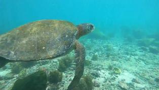 Galápagos: Un tesoro natural que lucha contra los microplásticos