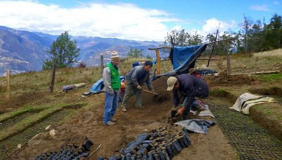 El Gobierno Regional de San Martín produce y entrega plantones para desarrollar trabajos de reforestación en las provincias y distritos del departamento. (Foto: Andina).
