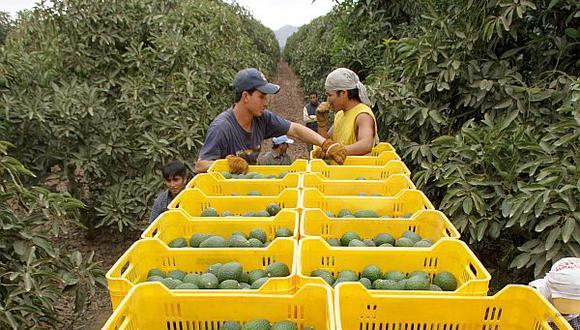 La agricultura no merece pobreza, informalidad, ni desempleo, sino que, con todo su potencial y una mejor ley, debe seguir generando riqueza, bienestar y empleo formal para el Perú. (Foto: GEC)