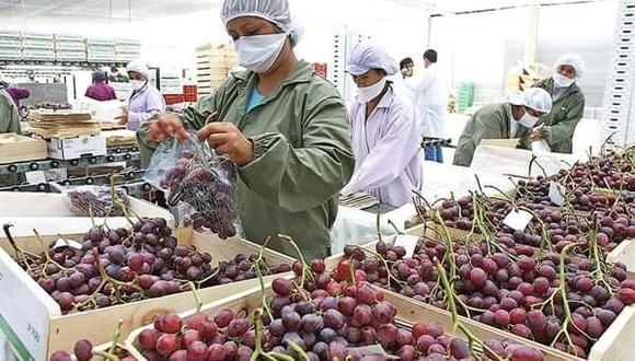 Estados Unidos, Holanda y Chile encabezan la lista de los principales países destino de las agroexportaciones peruanas. (Foto: GEC)