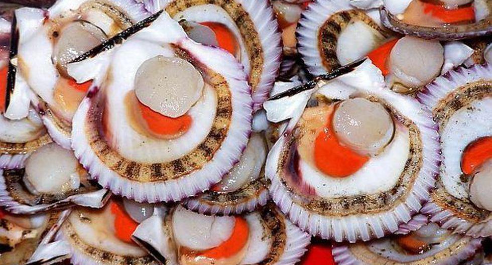 La concha de abanico es uno de los productos acuícolas más demandados en el exterior. (Foto: Lino Chipana / GEC)