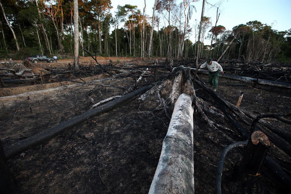 Ante la deforestación de la Amazonía de nuestro país, el gobierno de Estados Unidos analizaría tomar fuertes medidas contra Perú. (Foto: GEC)