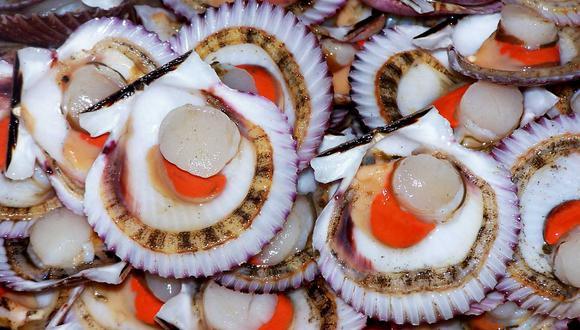 Conchas de abanico peruanas llegarían al Japón. (Foto: GEC).