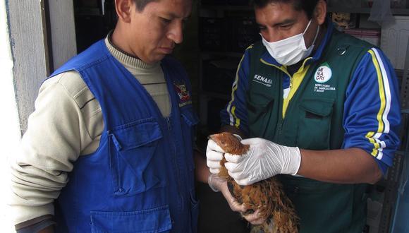 Hasta noviembre se recolectarán muestras serológicas de aves de crianza tecnificada y de traspatio