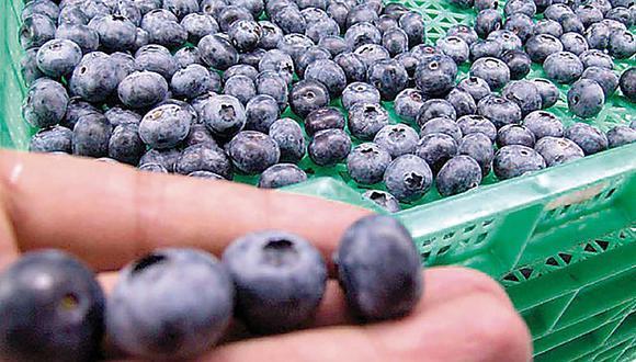 La mayoría de los arándanos importados disponibles en el mercado chino provienen de Perú y Chile.