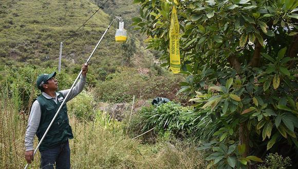 """En las regiones que van de La Libertad a Tacna, tenemos controlado la mosca de la fruta. Y garantizamos que las agroexportaciones se mantienen en niveles óptimas condiciones"""", dijo Miguel Quevedo, de Senasa."""
