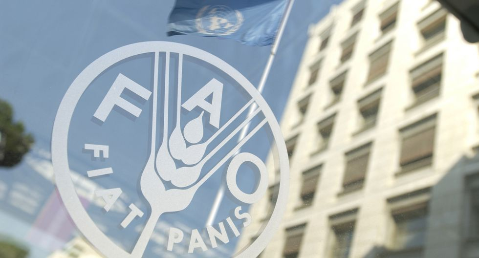 FAO organiza un seminario online sobre pesca ILEGAL (INDNR) el próximo viernes
