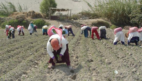 Toda referencia normativa al Ministerio de Agricultura o al Ministerio de Agricultura y Riego debe ser entendida como efectuada al Ministerio de Desarrollo Agrario y Riego. (Foto: GEC)