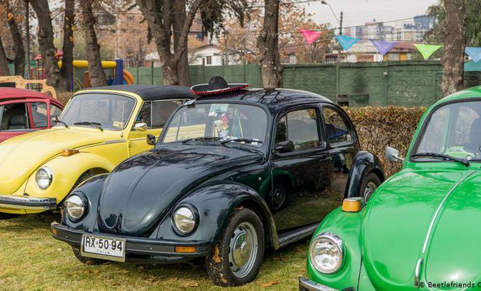 (Foto: Beetlefriends Chile)