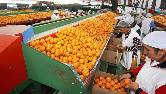 La campaña de mandarina peruana empezó en marzo. (Foto: GEC)