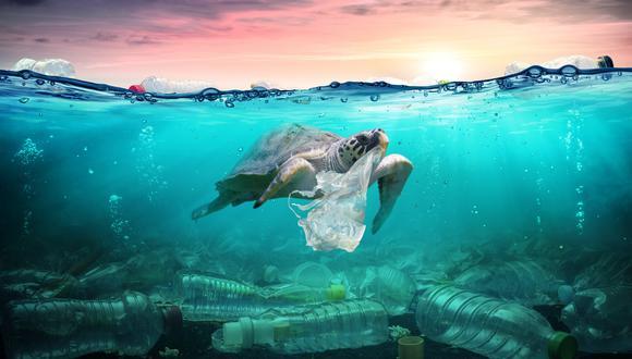 Más de 900 especies, incluyendo aves y peces, están afectadas por el problema, muchas de ellas protegidas o en peligro de extinción, precisa Oceana en su estudio. (Foto: iStock)