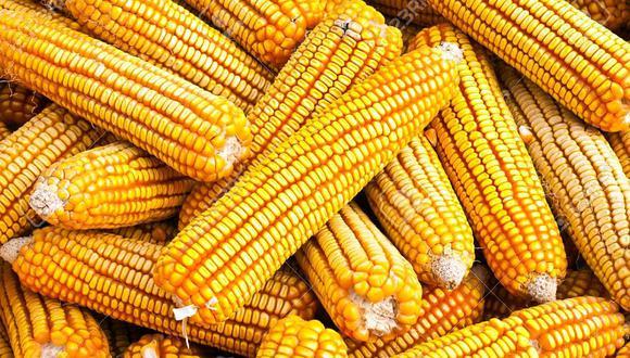 El maíz amarillo duro es un insumo clave para la dieta de aves de consumo. (Foto: GEC)