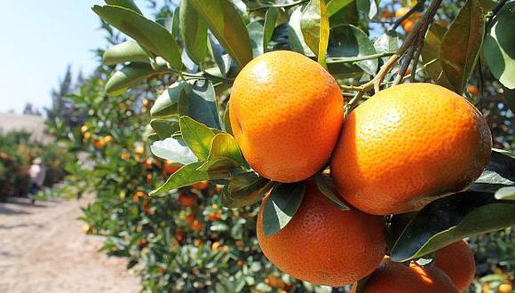La mandarinasatsuma ingresará al mercado japonés. Elúltimo producto peruano que entró a este país fue la palta Hass en 2015. (Foto: GEC)