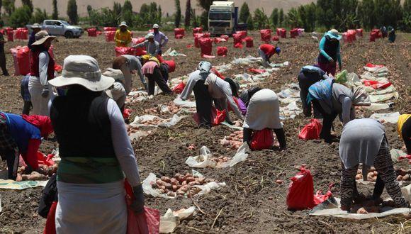 De acuerdo a la ENIS 2020, las intenciones de siembra de agosto 2020 a julio 2021 para el arroz serían de 412,2 mil hectáreas. (Foto: Difusión)